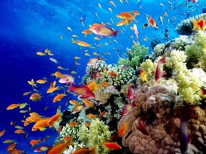 Great-Barrier-Reef-Holiday-Reef-Fish1